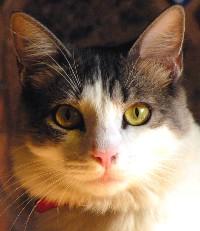 Gato Minimo