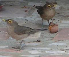 Dos aves y un níspero