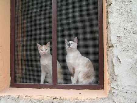2 gatos en la ventana enrejada