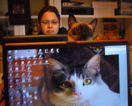 Gato asomando la cabeza por encima de la pantalla de una laptop