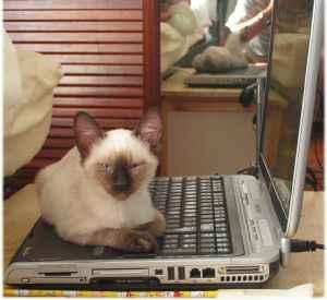 Gatita sobre el teclado