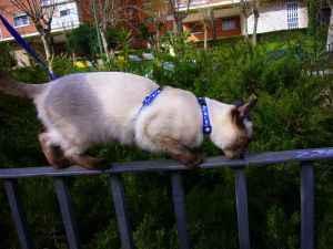Gato paseando sobre la barda