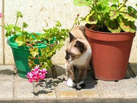 gatito entre las macetas de flores