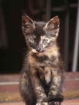 gatito oservando