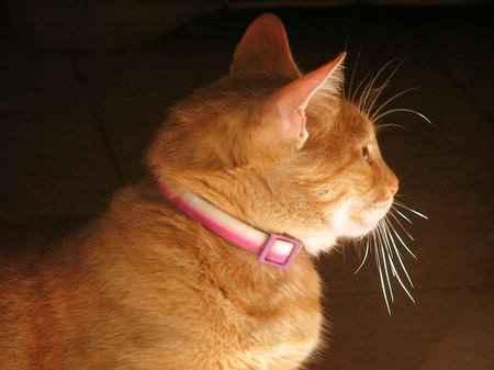 un gato modelo