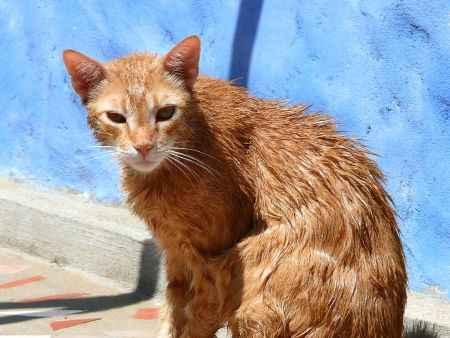 Gato después del baño