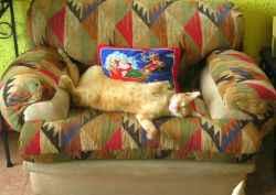 gato durmiendo en el sillón