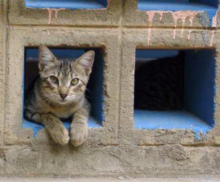 gato asomado cautamente