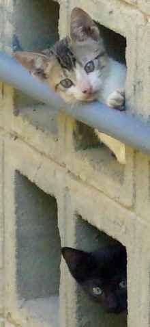 dos gatos asomados