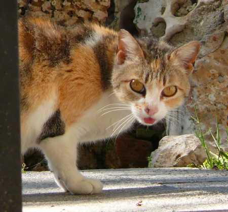 gato callejero del Parque de el Retiro
