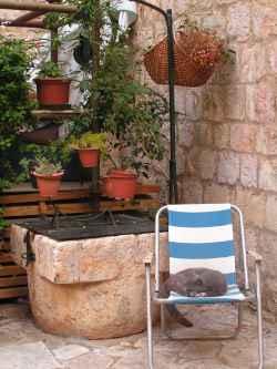 callecita de Dubrovnik y gato