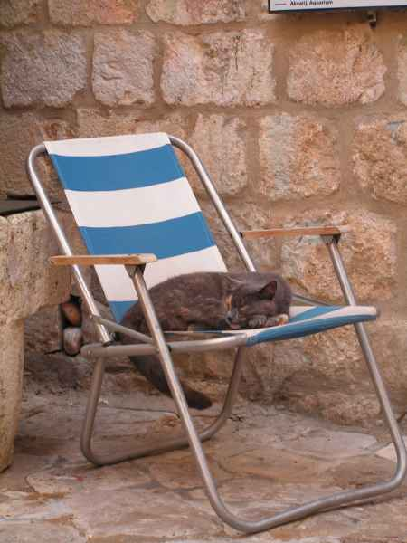 gato tomando el sol en una silla