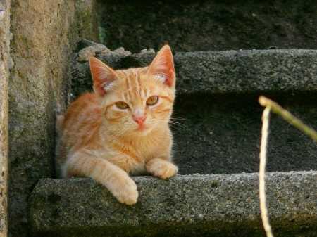 un gato en la escalera