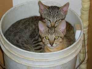 dos gatos dentro de un tobo