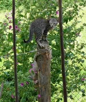 gatitos subiendo a un poste