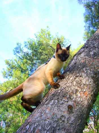 gato subiendo al arbol
