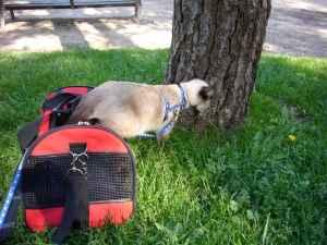 gato saliendo del transportin