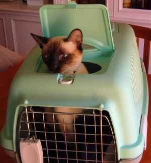 gato en su kennel