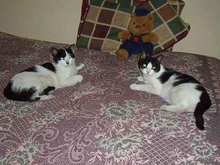 Dos gatas peruanas