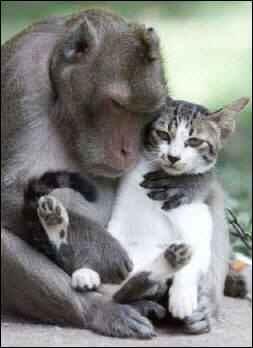 Mono y gatico