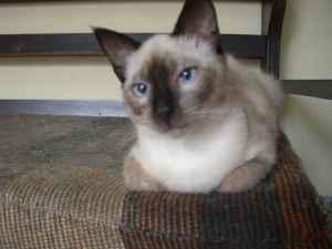 el gato Lelo