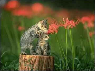 Paraja de gatos entre las flores