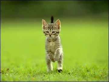 gatico saltando en la hierba