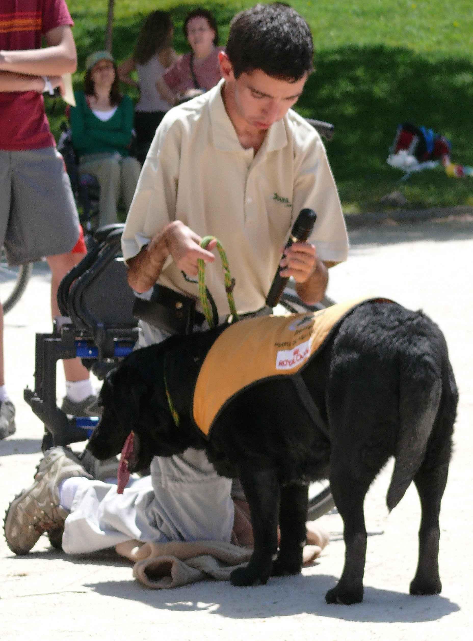 demostracion canina