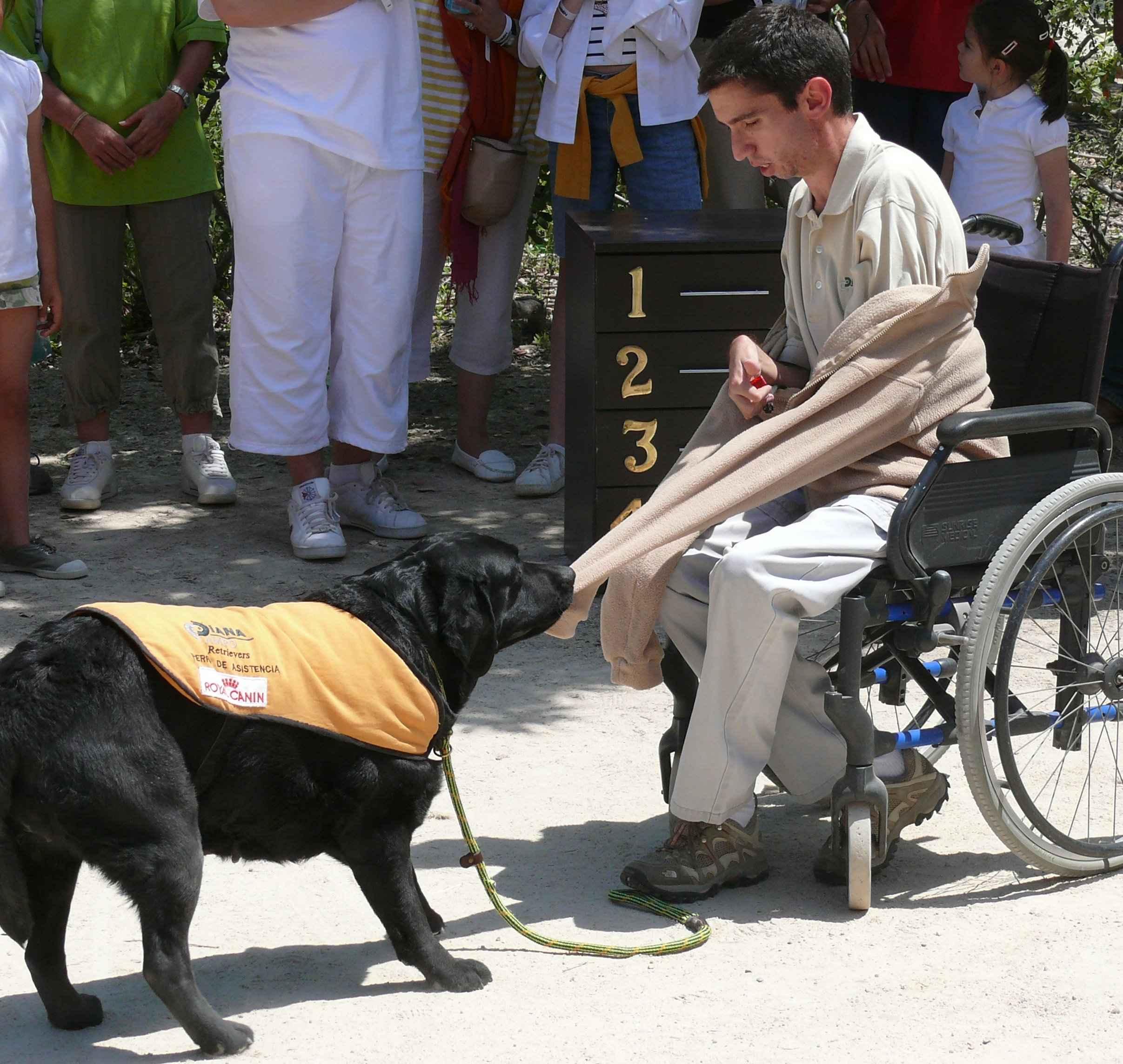 demostración canina
