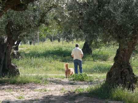 perro y dueño paseando