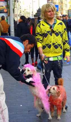Perros pintados de colores