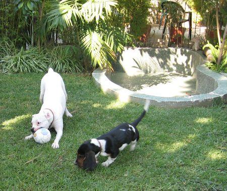 Cleo y Circe jugando