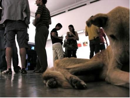 perro amarrado en un museo