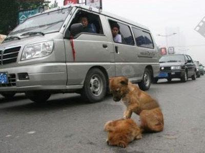 perro cuidando a otro muerto