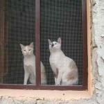 Dos en la ventana enrejada