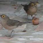 Reclamo para aves