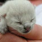 El más pequeño