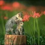 El gato. Felis silvestris catus