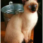 Aiko, una gatita consentida
