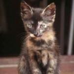 La gatita observadora
