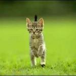 Características generales de los gatos