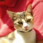 Interpretando el comportamiento del gato