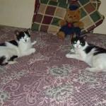 Dos gatitas adoptadas