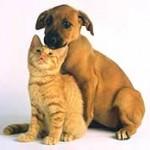 ¿Perro o gato, qué elegir?