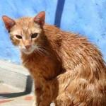 bañando al gato