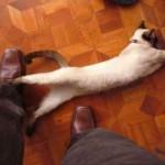 El gato se frota contra tus piernas