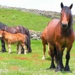 Los caballos y yo