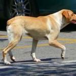 Un perro abandonado
