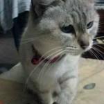 La gata Ramona