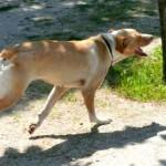 La perra del parque Juan Carlos I